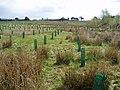 New woodland, South Lanarkshire - geograph.org.uk - 168959.jpg