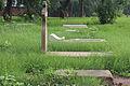Nicholson Cemetery graves.JPG