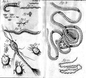 Nicolas Andry - Illustrations drawn from microscopic observation, from Breeding of Worms