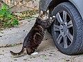 Nicosia 01-2017 img07 cats.jpg