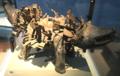 Nkisi Nkondi Kozo (Kongo, Landana, Cabinda), World Museum Liverpool.png