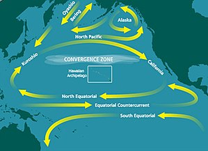 Map showing large-scale looping water movements within the Pacific. One circles west to Australia, then south and back to Latin America. Further north, water moves east to Central America, and then joins a larger movement further north, which loops south, west, north, and east between North America and Japan. Two smaller loops circle in the eastern and central North Pacific.