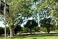 Northridge, Los Angeles, CA, USA - panoramio (33).jpg