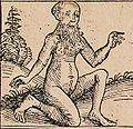 Nuremberg chronicles - Strange People - Androgyn II (XIIv).jpg