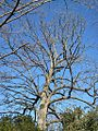 Oaklawn Garden 2011-01-29 Poplar Pike Germantown TN 06.jpg