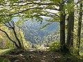 Oberhalb Heiletsegg Bauma - panoramio - Markus Plüss.jpg