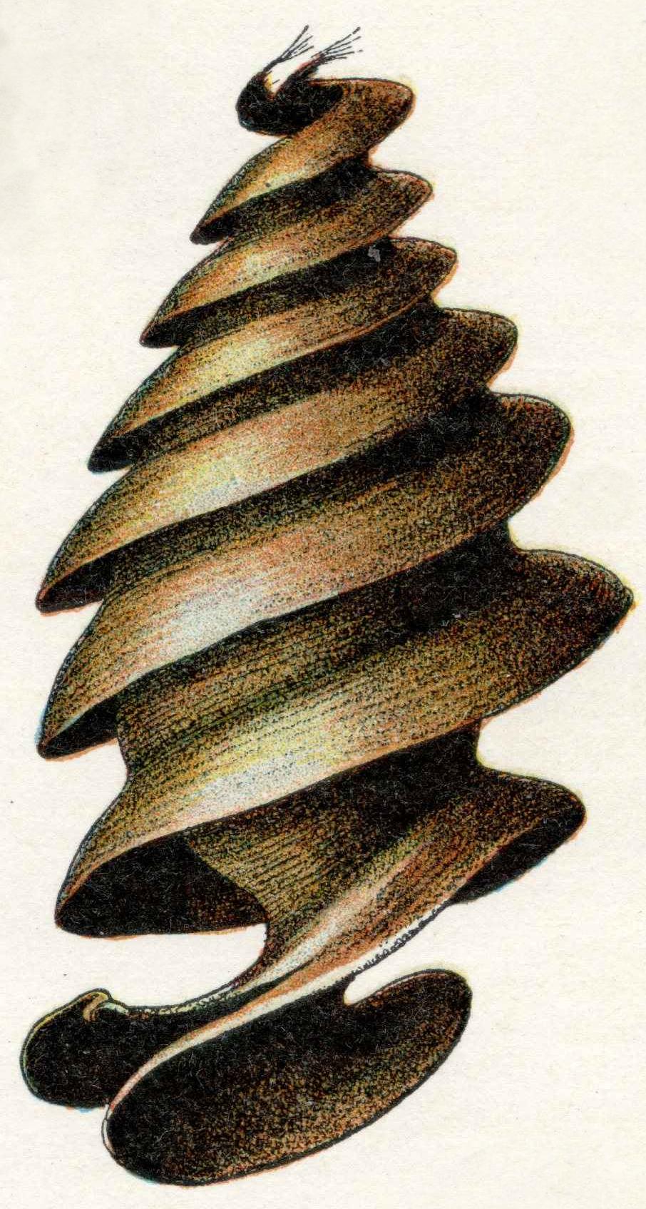 Oeufs002b,55