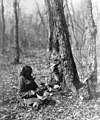 Ojibwe woman tapping for sugar maple syrup (cropped).jpg