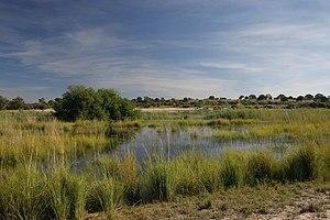 Ufer des Okavango bei Utokota