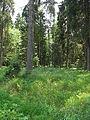 Olšina v Novolhotském lese (013).jpg