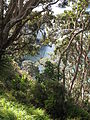 On the road to Cathedral cove.jpg