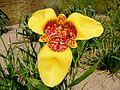 Orchid (8770770953).jpg