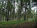 Otomin, gmina Kolbudy - panoramio - Sławek Zawadzki (4).jpg