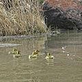 Owyhee River Wilderness, A. Hedrick (23127925836).jpg