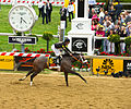 Oxbow crosses finish line at 2013 Preakness Stakes.jpg