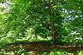 Pärn Mõntu pargis Saaremaal.jpg