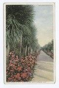 Palmetto Walk, Hotel Potter, Santa Barbara, Calif (NYPL b12647398-74115).tiff