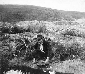 An Alaskan miner pans for gold in 1916.