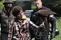 Parabuteo unicinctus -falconry show-8a (5).jpg