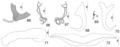Parasite150040-fig9 Pseudorhabdosynochus firmicoleatus Kritsky, Bakenhaster & Adams, 2015 - FIGS 65-72.tif
