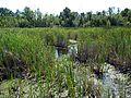 Parc-nature du Bois-de-l-ile-Bizard 63.jpg