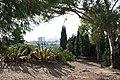 Parc Mediterrània Badalona plantes.jpg