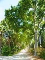 Parc Samà, avinguda amb plàtans - panoramio.jpg