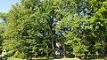 Park w Wojniczu.jpg