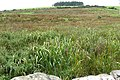 Pasture at Moat - geograph.org.uk - 969468.jpg