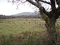 Pasture viewed from the Mawddach Trail - geograph.org.uk - 1103554.jpg