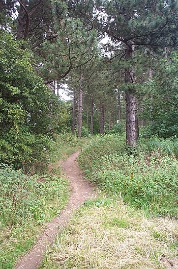 English: Path in Woods. Path in the woods near...