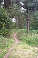 Path in Woods - geograph.org.uk - 32091.jpg