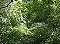 Path south of Crooked Lane - geograph.org.uk - 439053.jpg