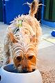 Pawliday Inn Pet Resort 06.jpg