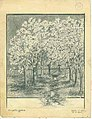 Pencil sketch of the cherry trees in Robert White's garden, Olympia, April 7, 1887 (WASTATE 2118).jpeg