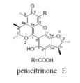 Penicitrinone E.png