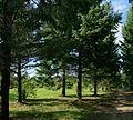 Pereslavl Arboretum R41.jpg