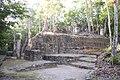 Petén Campechano, Calakmul, Campeche (21576652094).jpg