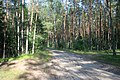 Piaśnica Forest - Road.jpg
