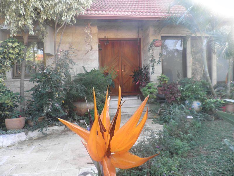 ציפור גן עדן בחצר הבית