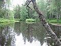 Piltua river 1.JPG