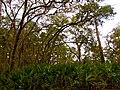 Pinckney Island National Wildlife Refuge (5958491668).jpg