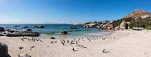 Pingüinos de El Cabo (Spheniscus demersus), Playa de Boulders, Simon's Town, Sudáfrica, 2018-07-23, DD PAN 40-42.jpg