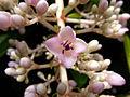 Pink flower macro (5947531414).jpg