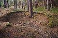 Pinky v lese severně od města, Kunštát, okres Blansko (03).jpg