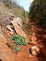 Pinos-Marnes Sella de Cau hike (26310169403).jpg