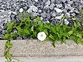Plant 13.jpg