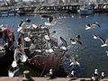 Plastic seagulls.jpg