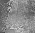 Plateau Glacier, tidewater glacier terminus, August 26, 1968 (GLACIERS 5787).jpg