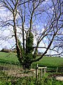Plumtree Hill - geograph.org.uk - 316171.jpg